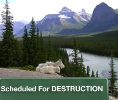 Scheduled For Destruction